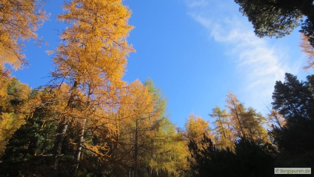 Lärchenwald nahe der Eisbergalm