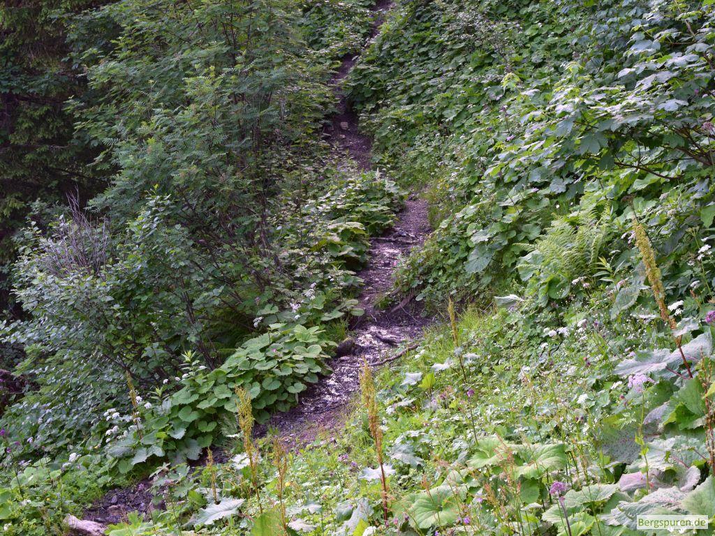 Pfad im Waldgürtel oberhalb der Priesbergalmen