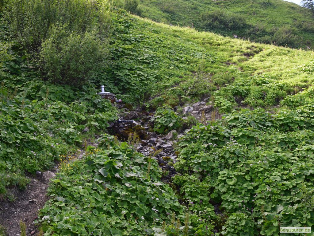 Quelle des Abwärtsgrabens unterhalb der Hohen Rossfelder