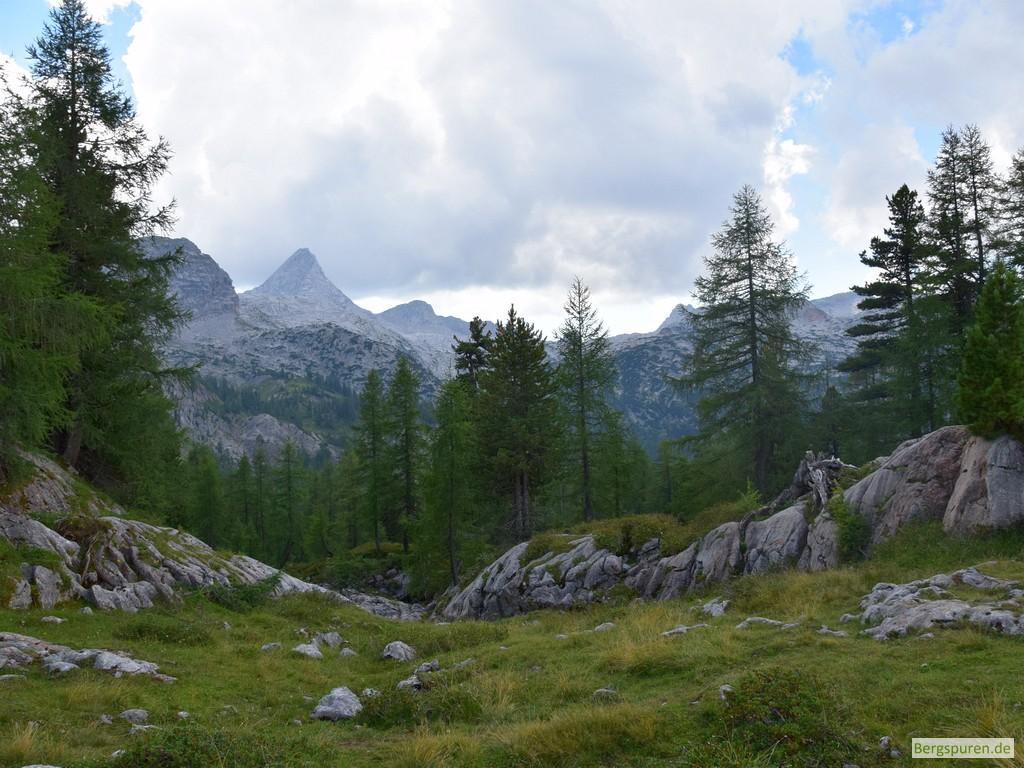 Wiese und licher Wald am Feldkogel