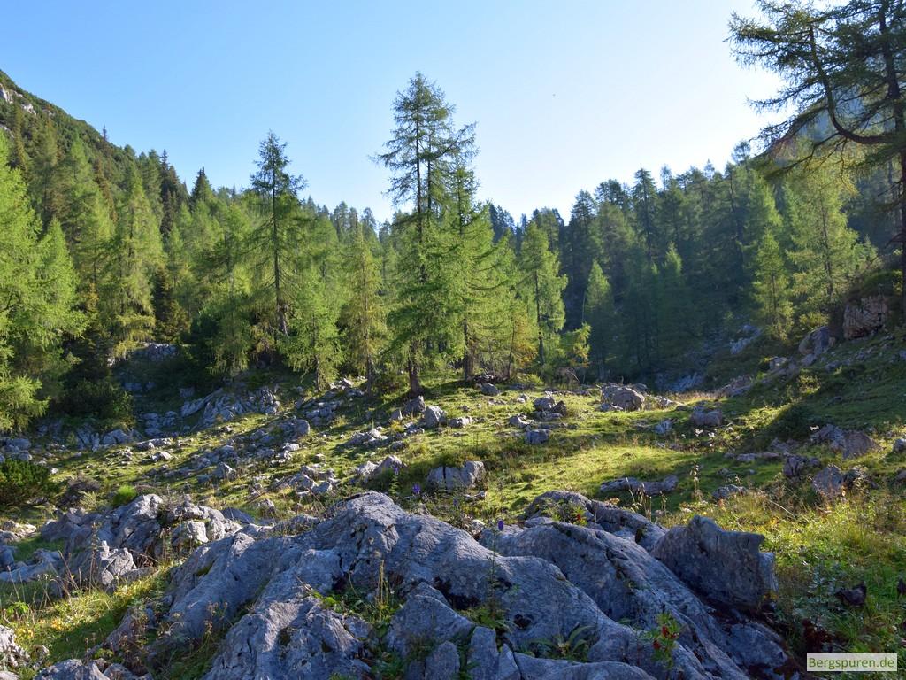 Bergwald zwischen Gotzentauern und Hohem Laafeld