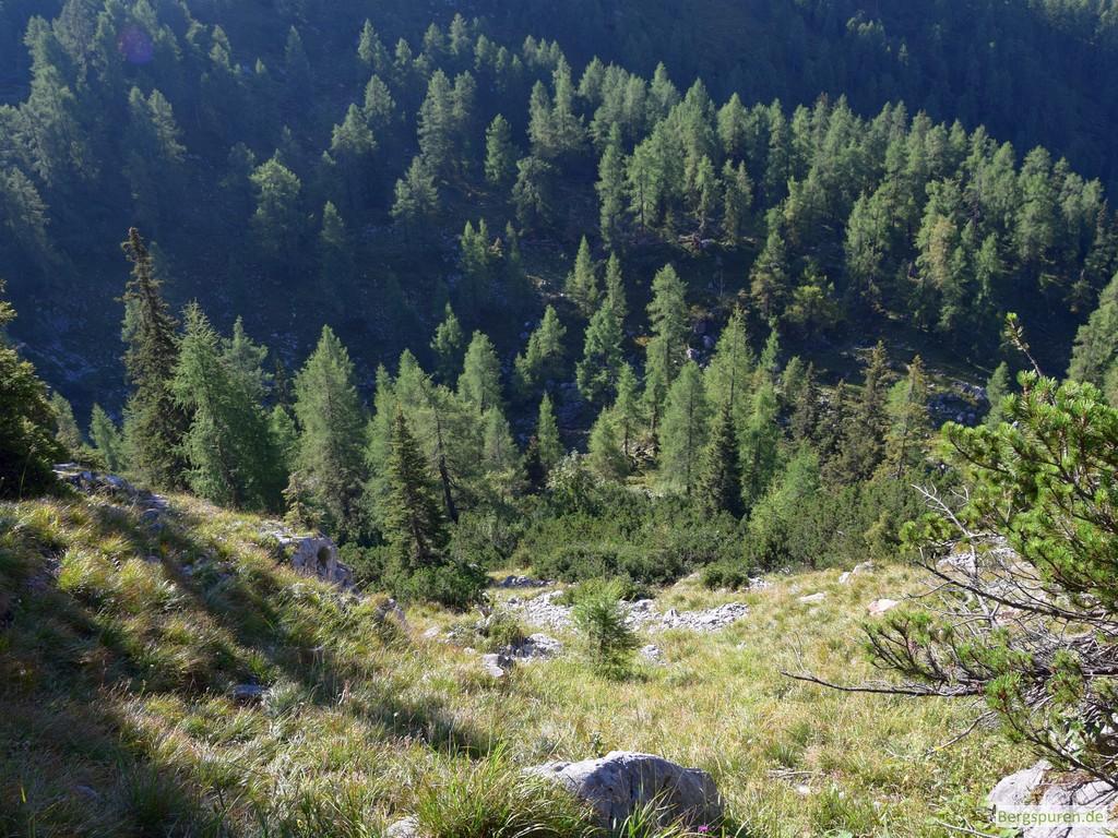 Bewaldete Senke unterhalb des Gotzentauerns