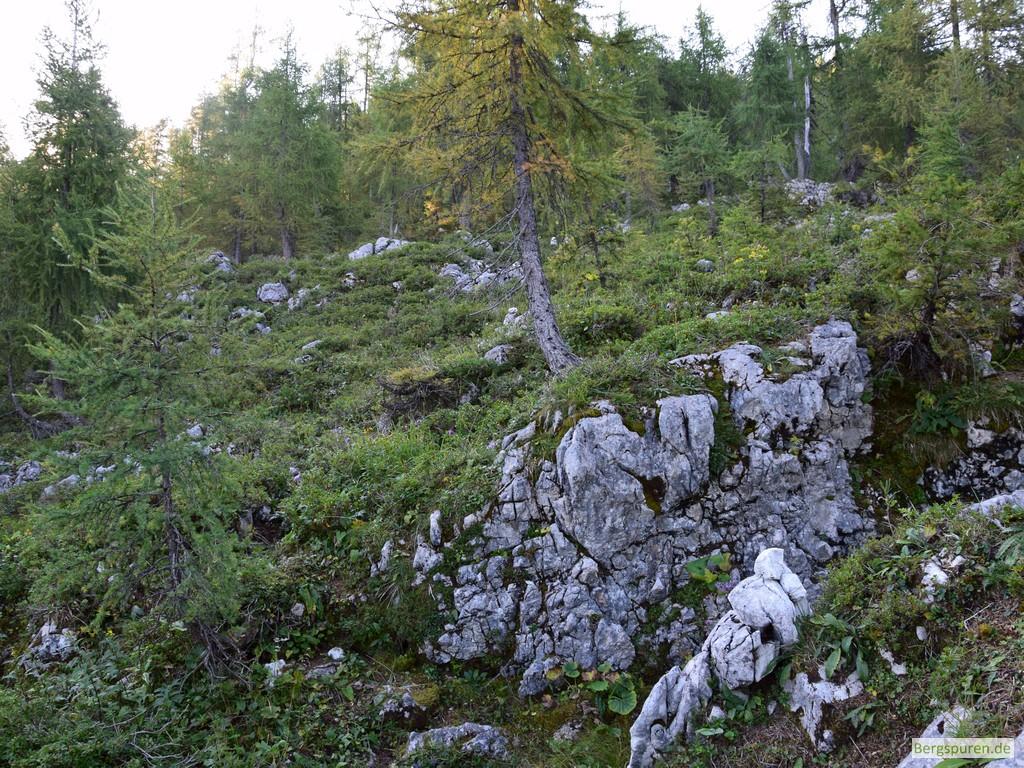 Felsdurchsetztes Dickicht mit Alpenrosen und Lärchen