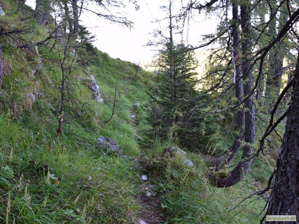 Gotzentauern - Steigspuren im Gras