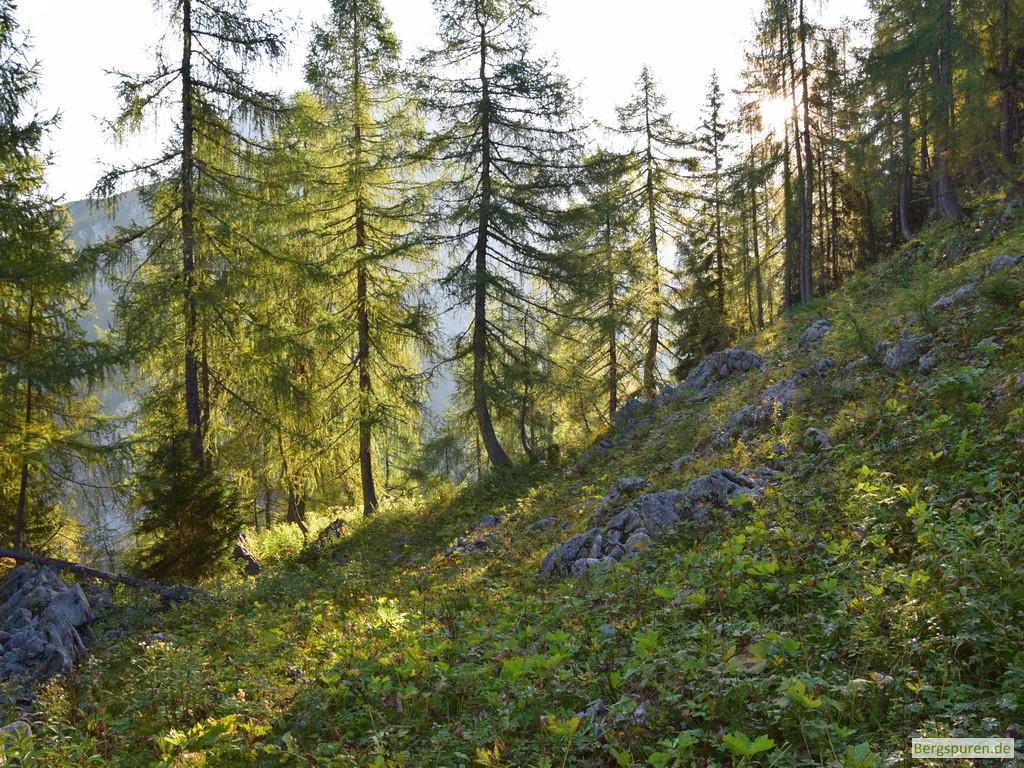 Mittlerer Hirschenlauf - Ausstieg