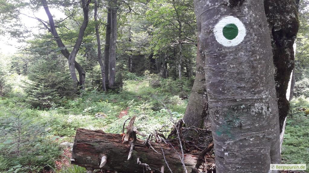 Grün-weiße Wegmarkierung am Gruberhörndl