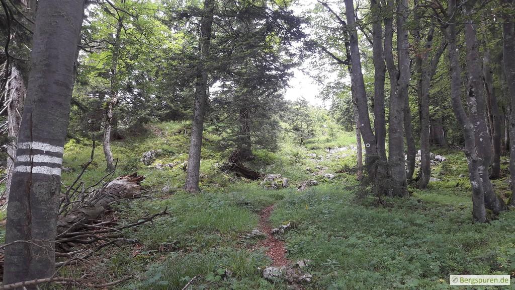 Lichter Wald am Gruberhörndl