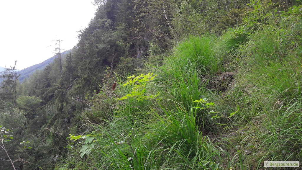 Steile Graspassage am Weittalsteig