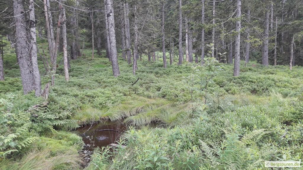 Sumpfiges Gelände am Weg zum Gruberhörndl