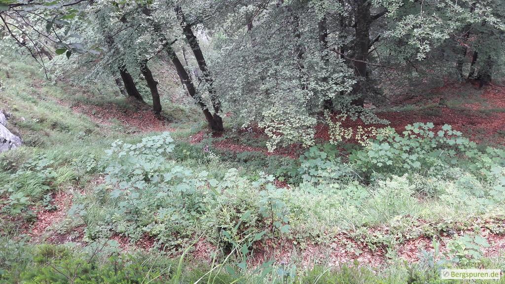 Steiler Bergpfad mit Serpentinen durch lichten Wald