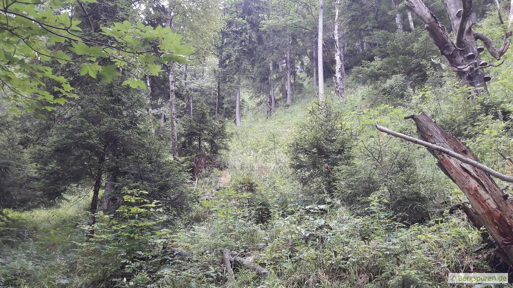 Dichte Vegetation am Weittalsteig