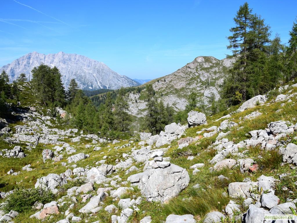 Steindaube bei felsdurchsetzter Ebene