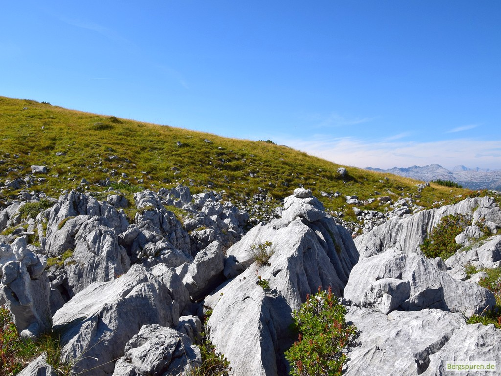 Steindaube am grasigen Rücken des Hochsäul