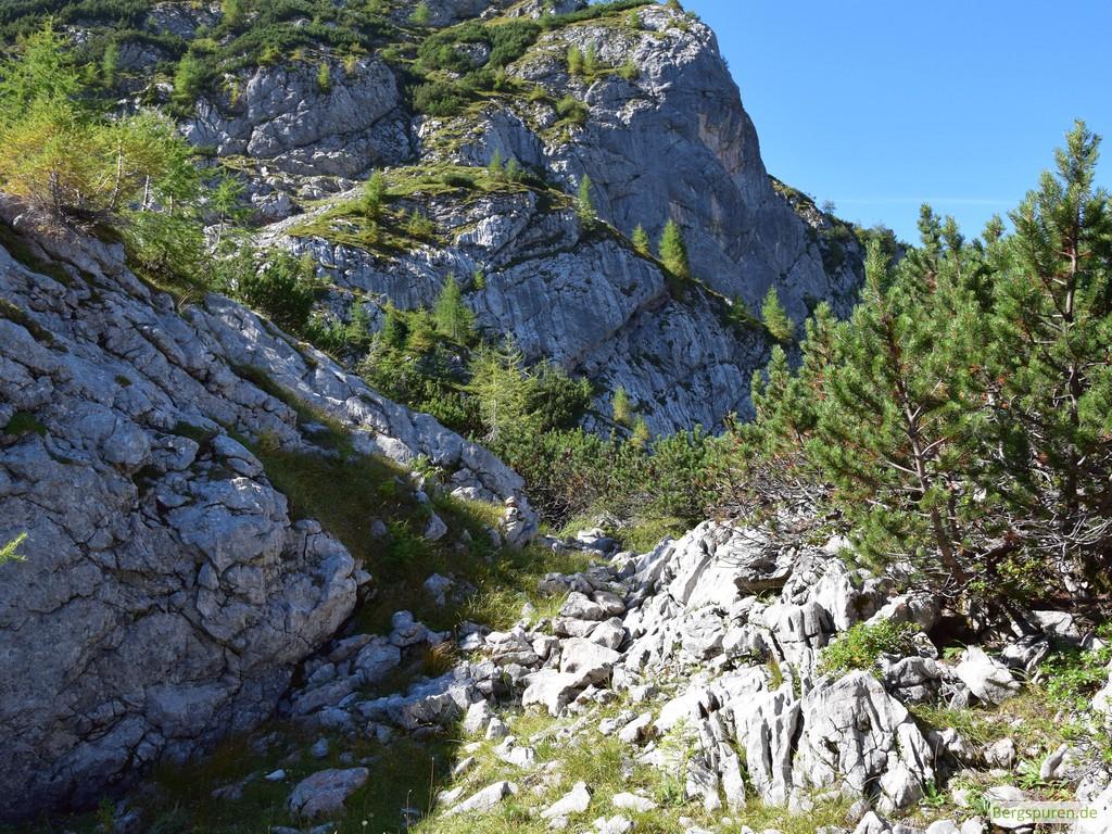 Steindaube in Latschengasse am Weg zum Hochsäul