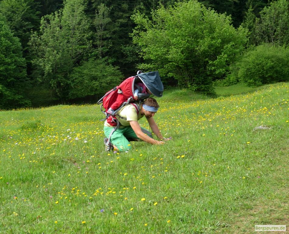 Wanderer mit Kinderkraxe fotografiert Blumen am Weg zur Kneifelspitze