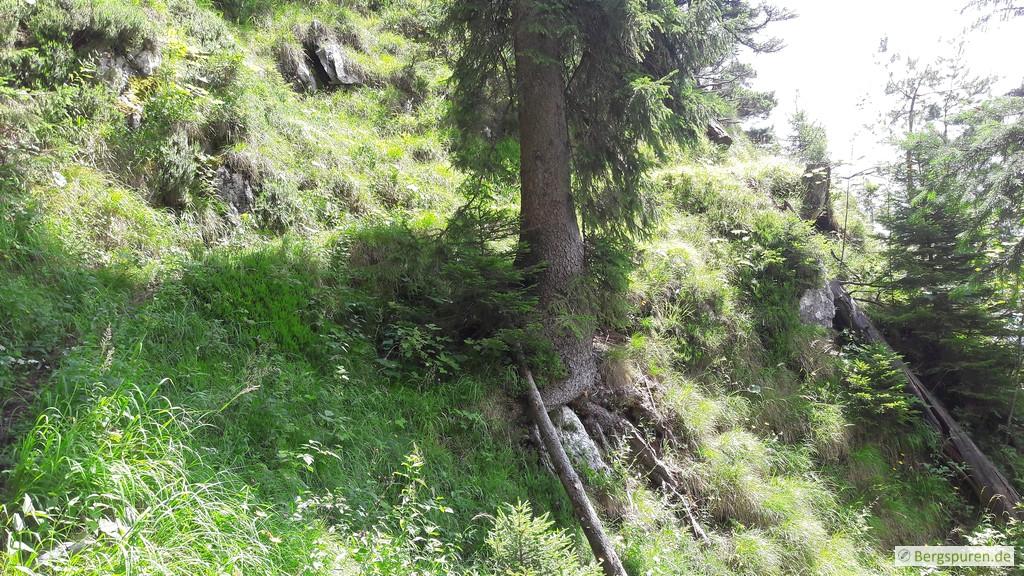 Querung eines steilen Grashangs