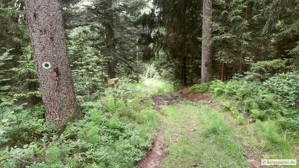 Matschiger Forstweg nahe der Weittalhütte