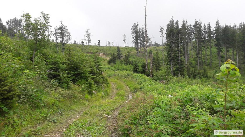 Offenes Gelände nahe der Weittalhütte