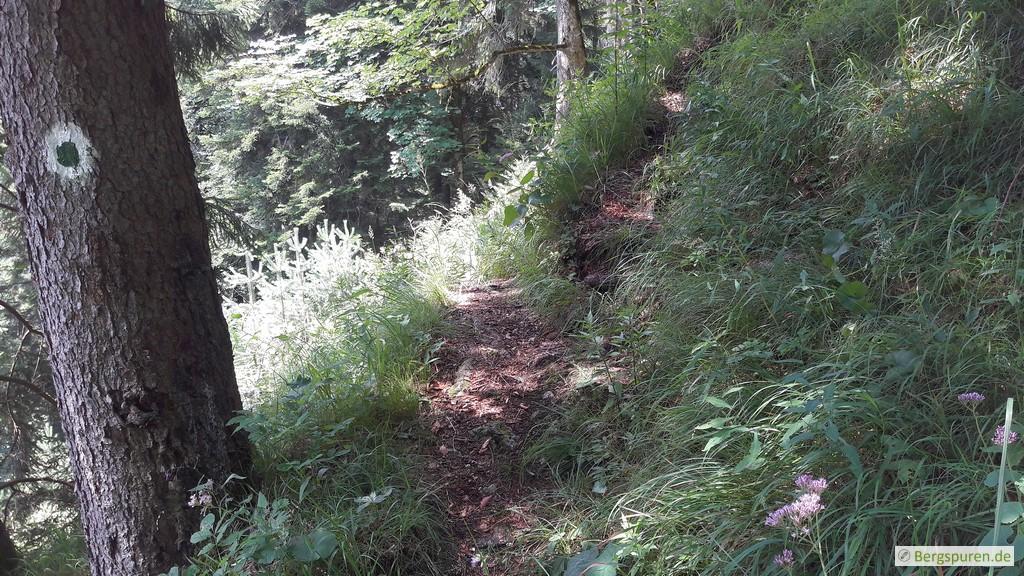 Wegteilung am Koialuweisteig auf 920 Höhenmetern