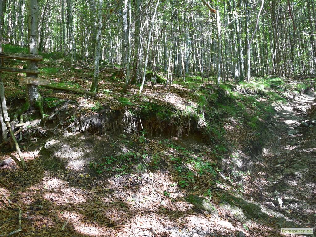 """Wegweiser """"Reiteralm"""" im Wald"""