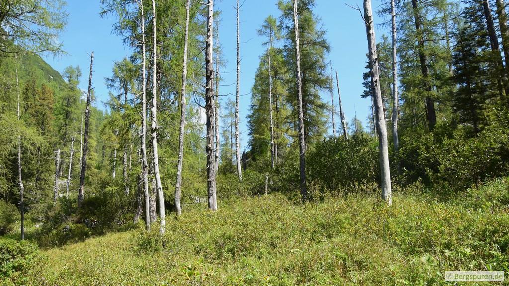 Abgestorbene Bäume in der Nähe des Grünsees