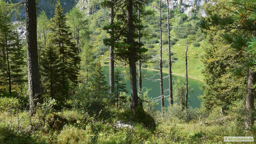 Grünsee hinter einzelnen Bäumen
