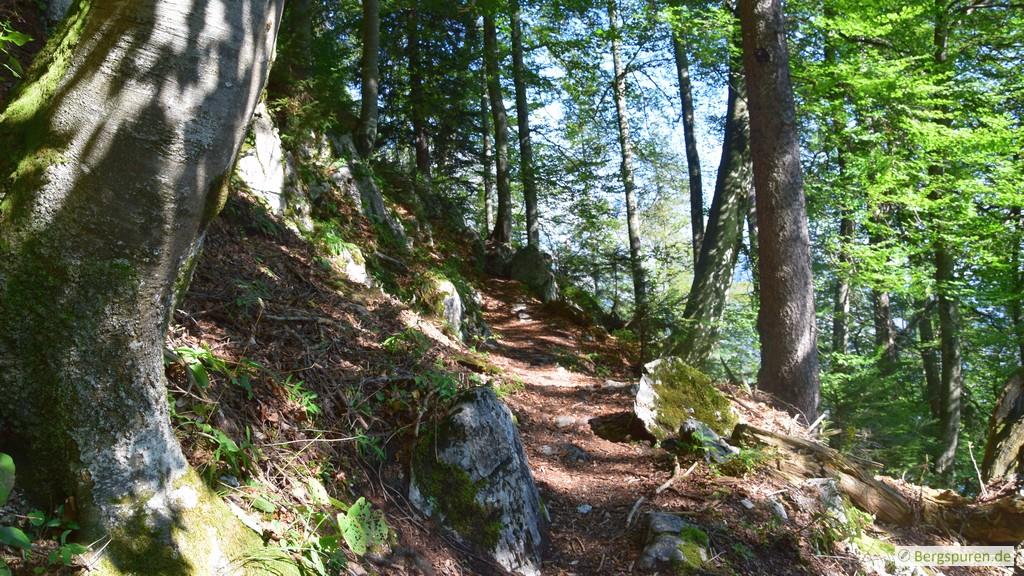 Sagerecksteig - Lichter Bergwald
