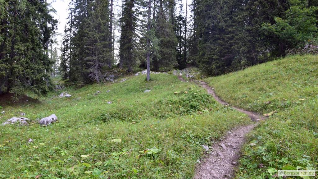 Wiese und Wald nahe des Grünsees