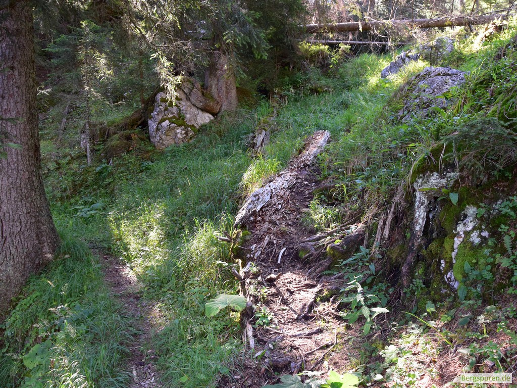 Abzweigung am Forstbegangsteig