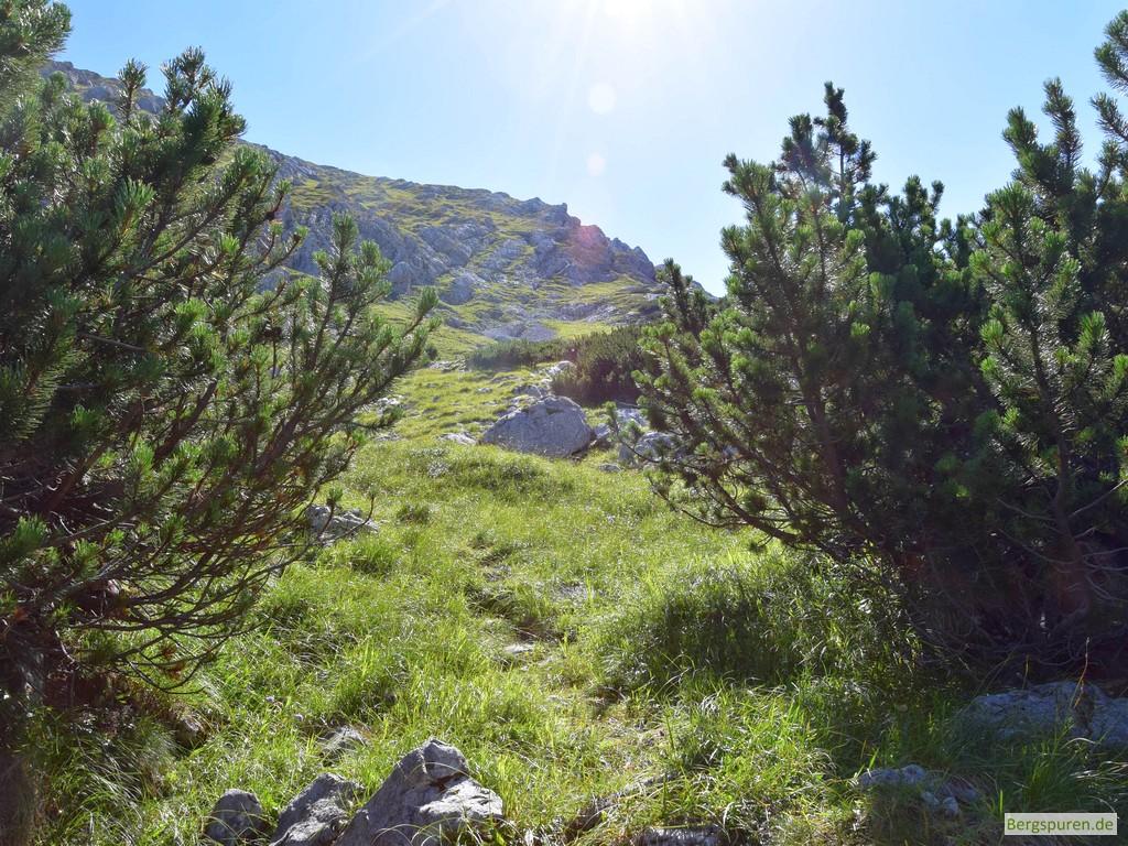 Ausstieg aus der Latschenregion im Sittersbachtal