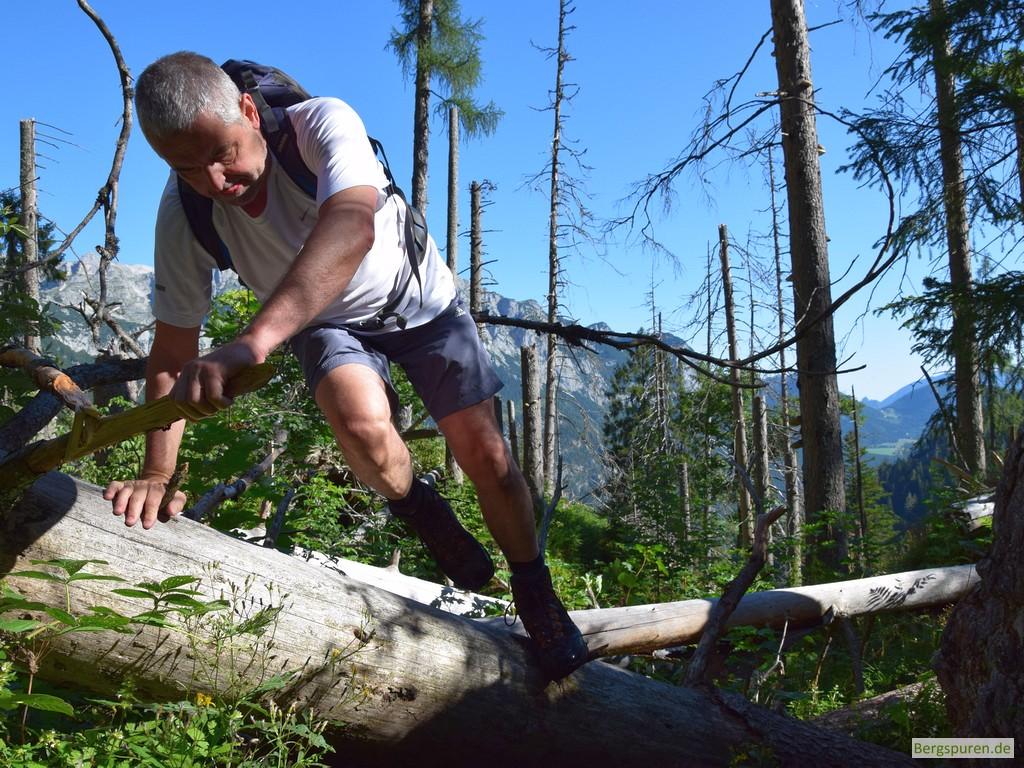 Überklettern umgestürzter Bäume am Steig ins Sittersbachtal