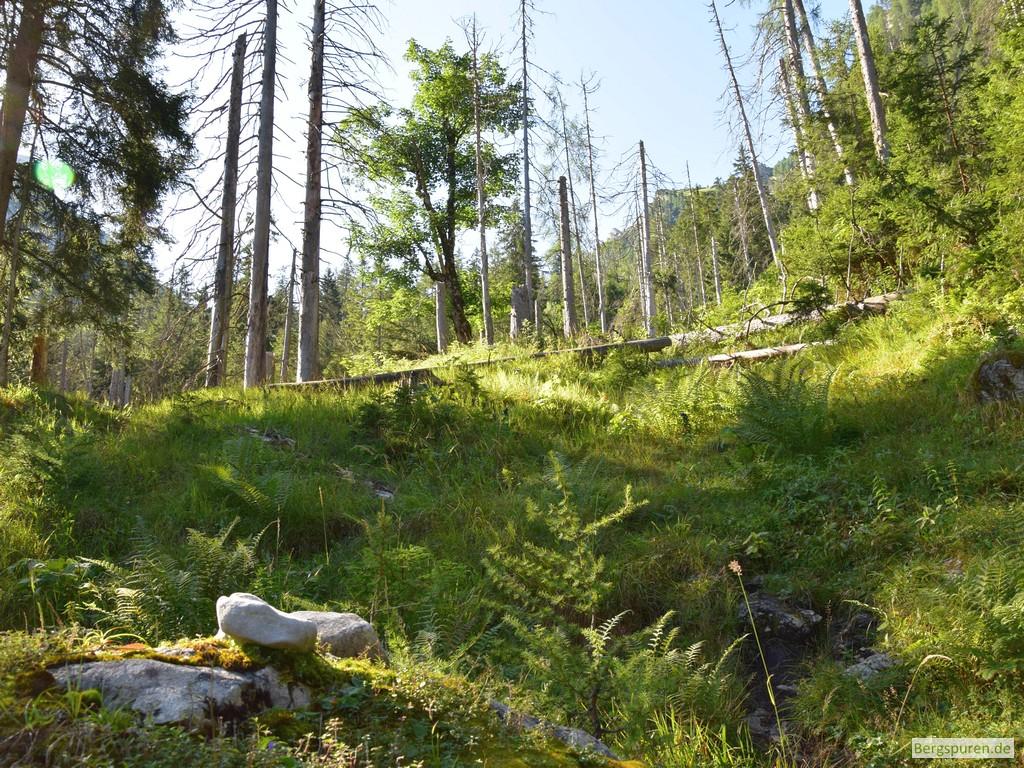 Wildnis am Steig ins Sittersbachtal