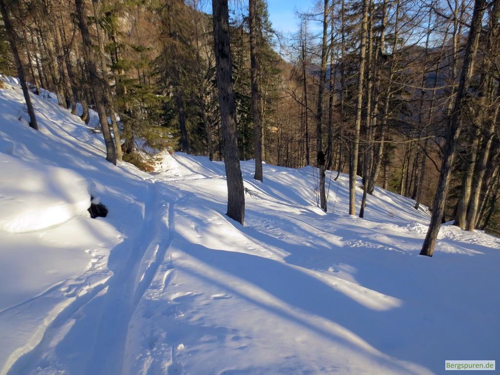 Skitouren-Aufstiegsspur im lichten Bergwald am Fuß des Birnhorns in den Leoganger Steinbergen