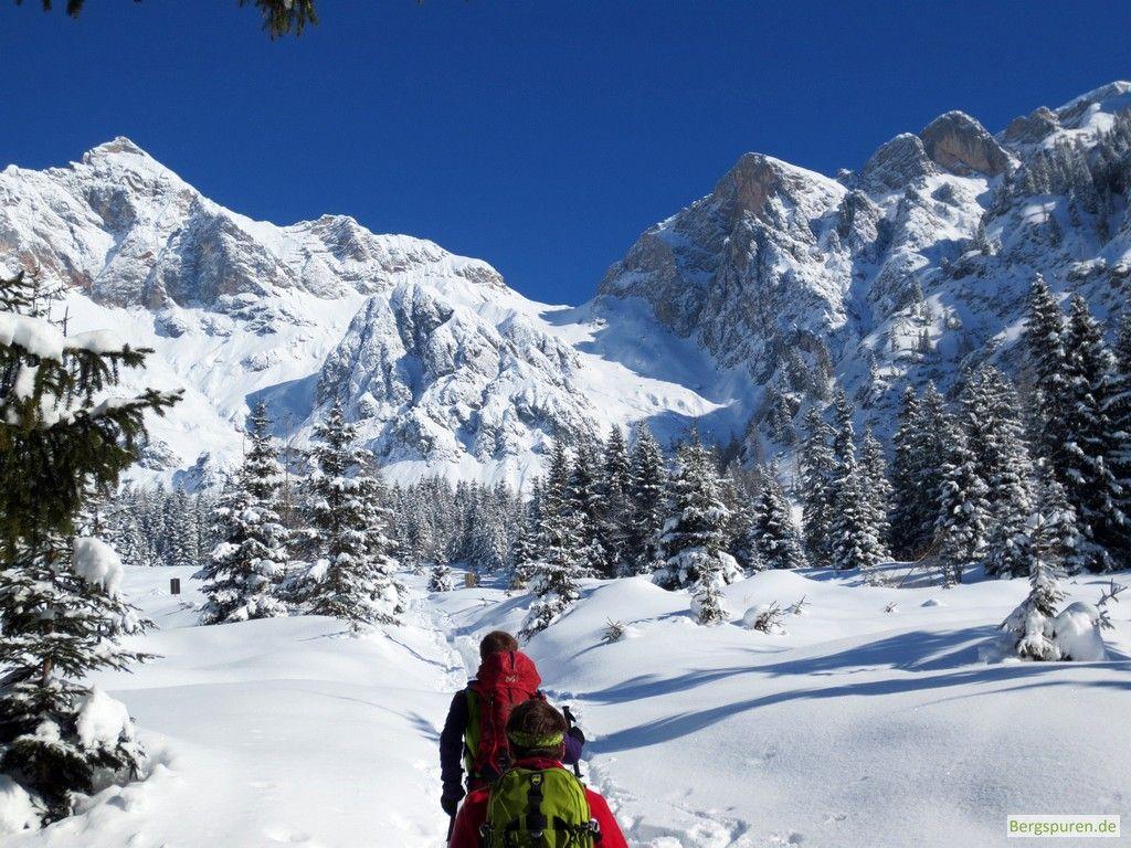 Lichter Wald bei der Skitour Buchauer Scharte