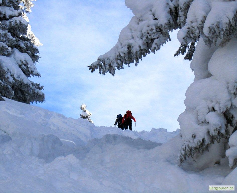 Skitourengeher auf dem Weg zum Gamsknogel: Im Vordergrund tief-verschneite Bäume