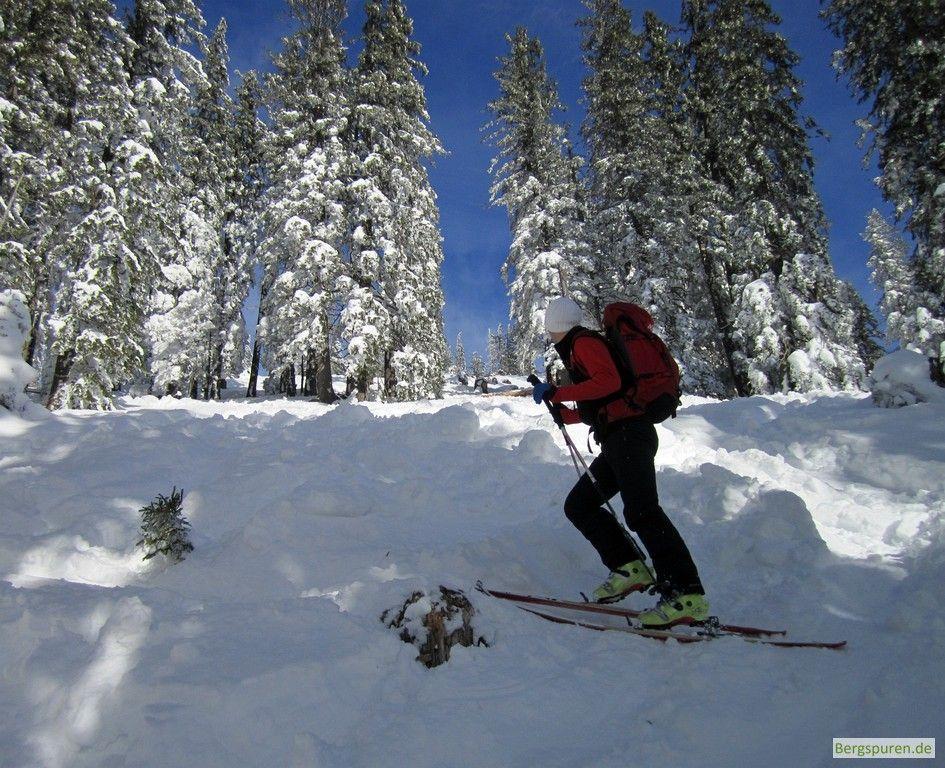 Skitourengeher auf dem Weg zum Gamsknogel kurz unterhalb der Waldgrenze