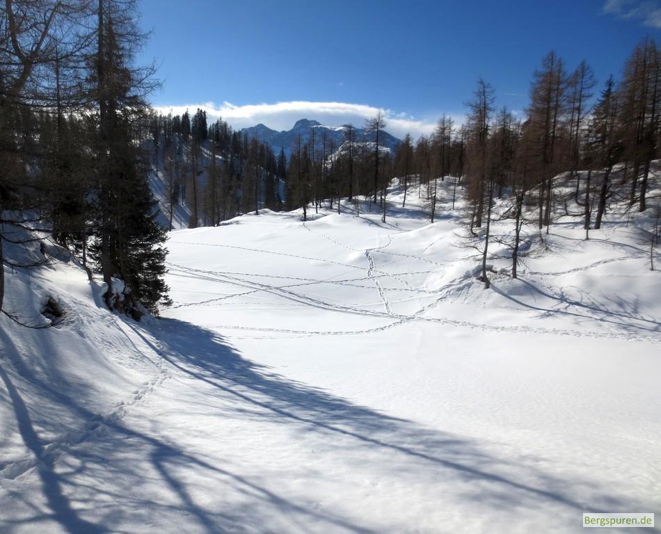 Tierspuren im Schnee der Bärengrube