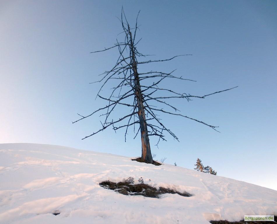 Toter Baum oberhalb der Königsbachalm