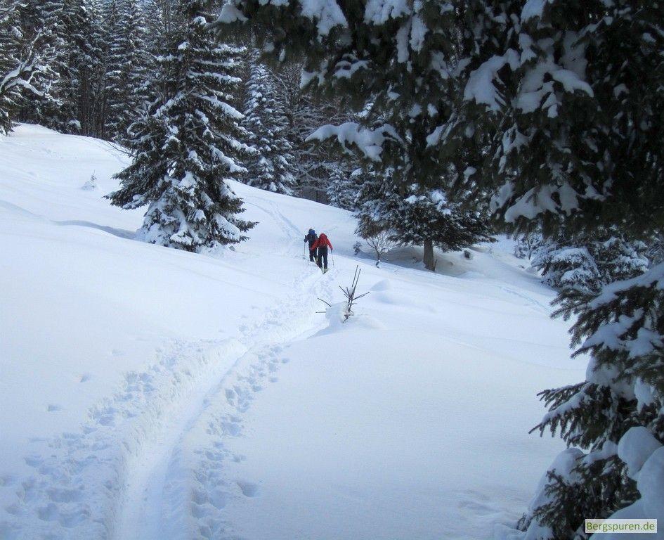 Skitour Peitingköpfl: Aufstieg im lichten Wald