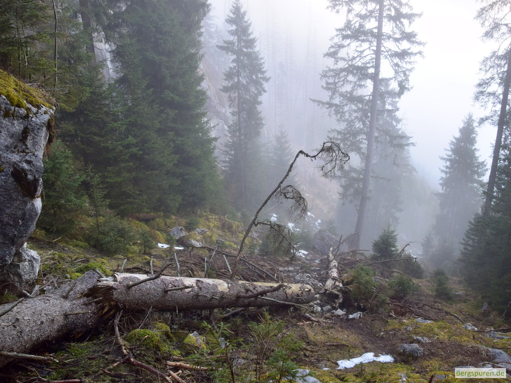 Umgestürzter Baum am Steig zum Sittersbachtal