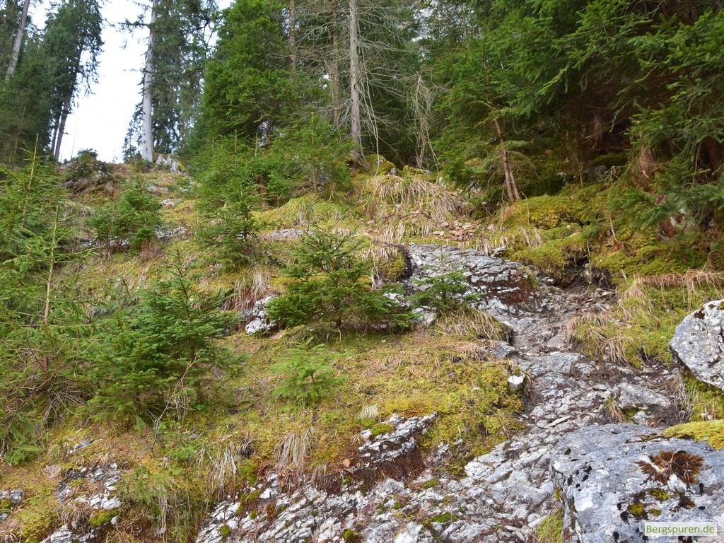 Steig ins Sittersbachtal - zweite Steilstufe
